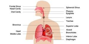 bijholteontsteking, voorhoofdsholteontsteking genezing door halotherapie