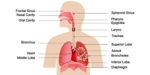 holte ontsteking zonder verkoudheid